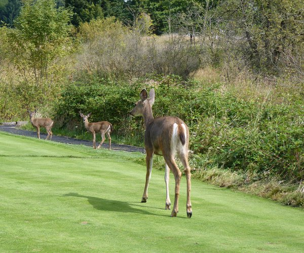 Photo of Pumpkin Ridge Golf Club (Witch Hollow course)