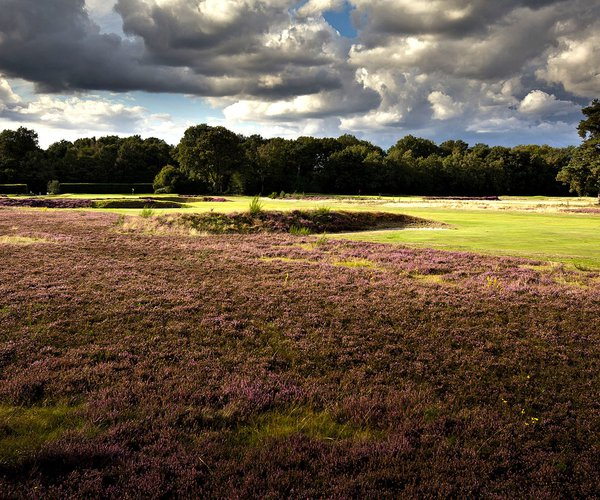 Photo of Walton Heath Golf Club (New course)