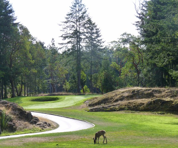 Photo of Olympic View Golf Club