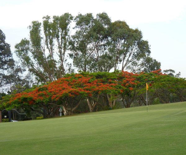 Photo of Indooroopilly Golf Club (East course)
